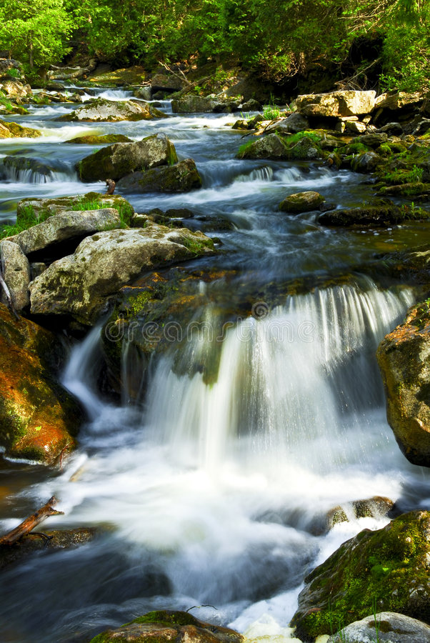 Fluss durch Holz stockfotos