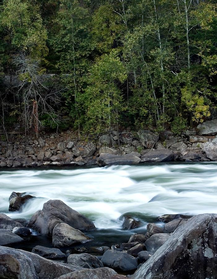 Fluss durch Wald stockbild