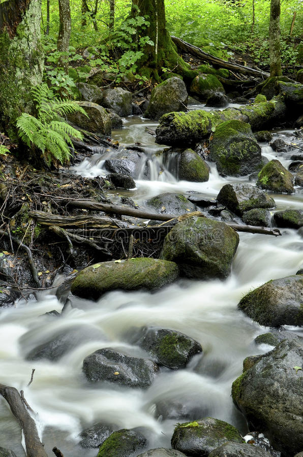Fluss in Espoonkartanonkoski stockbild