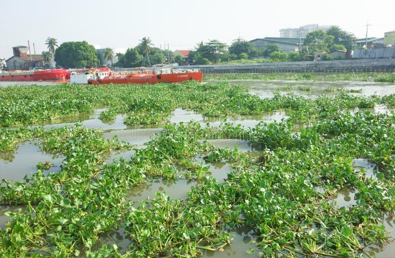 Fluss gefüllt mit Seerosen lizenzfreies stockfoto