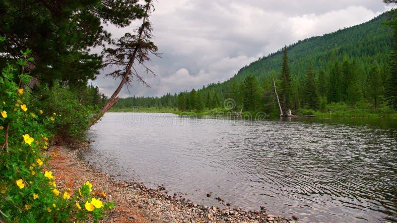 Fluss, gelbe Blumen und Berge. stockfotografie