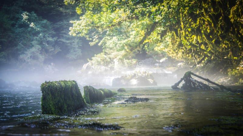 Fluss im Buchsbaumwald in Abchasien lizenzfreies stockbild