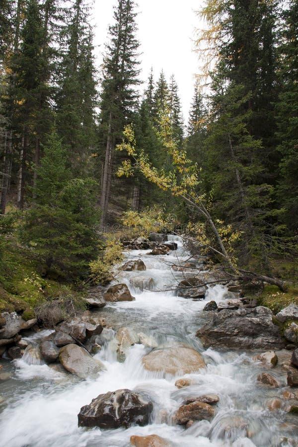 Fluss im Holz lizenzfreie stockbilder