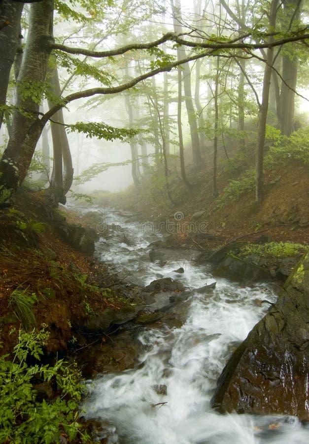 Fluss im Holz stockbilder