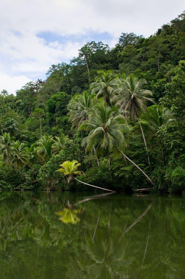 fluss im tropischen regenwald stockbild bild 9613835. Black Bedroom Furniture Sets. Home Design Ideas