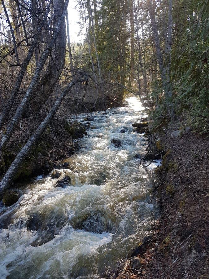 Fluss im Wald, BC Kanada lizenzfreie stockfotografie