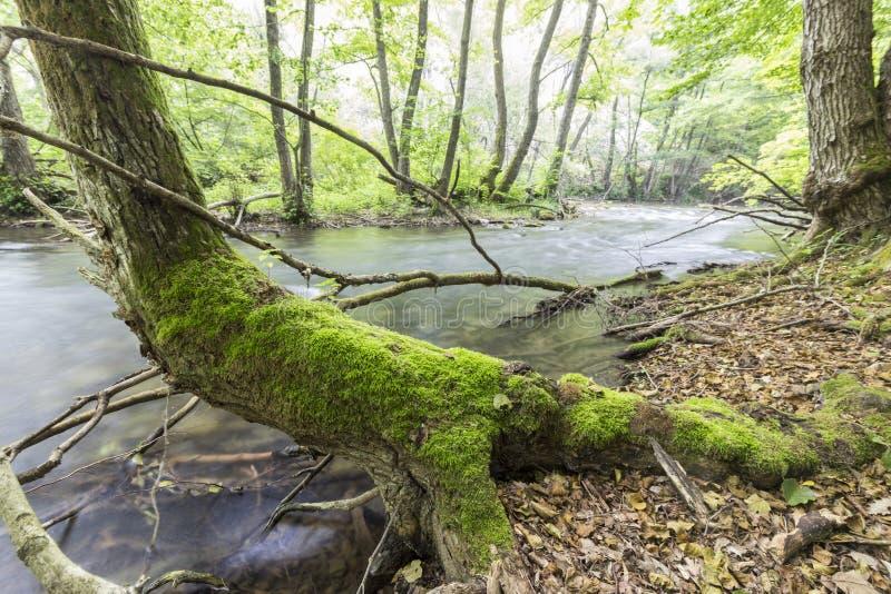 Fluss Kamchia stockbilder