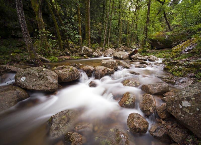 Fluss in Korsika stockfotografie