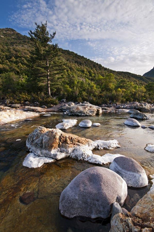 Fluss in Korsika stockbilder