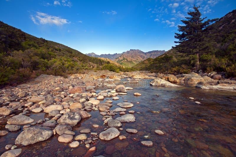 Fluss in Korsika stockfotos