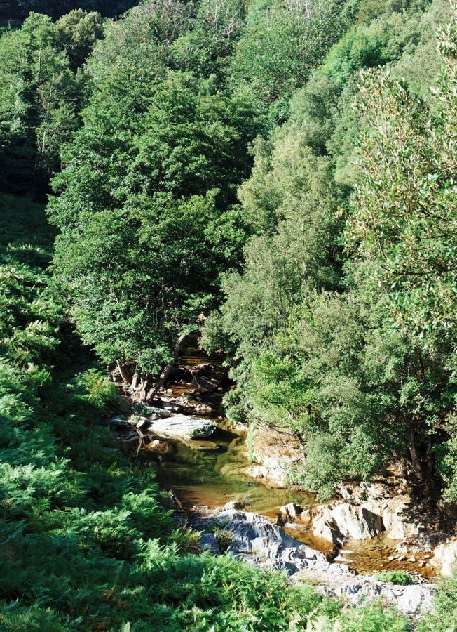 Fluss in Korsika-moutains lizenzfreie stockbilder