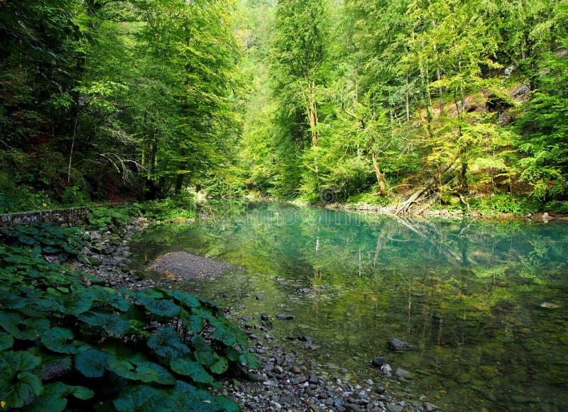 Fluss Kupa-Frühling stockbilder
