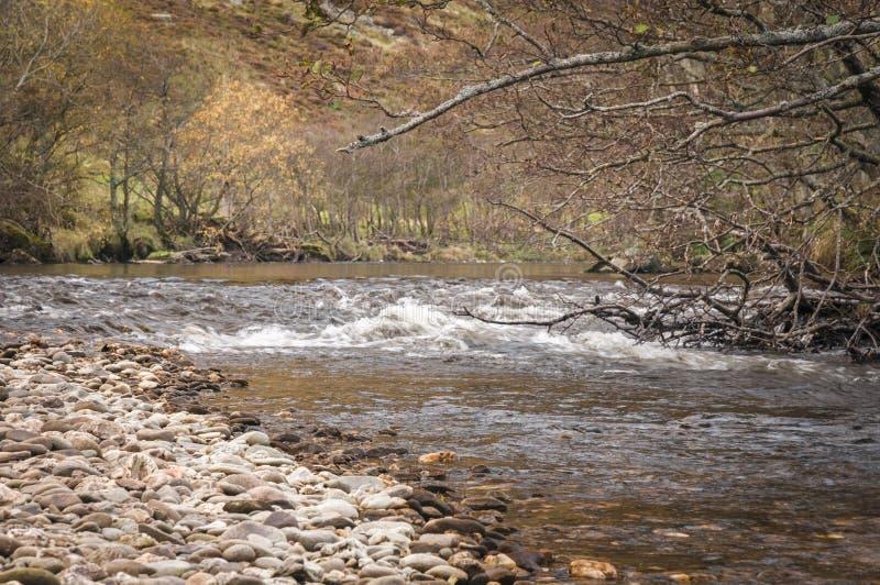 Fluss-Mandel stockbild