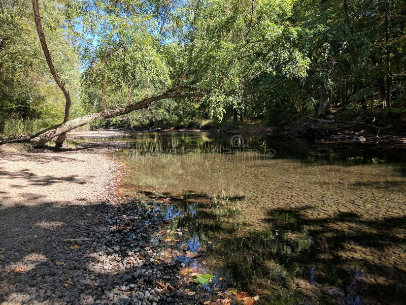 Fluss mit Bäumen stockfotos
