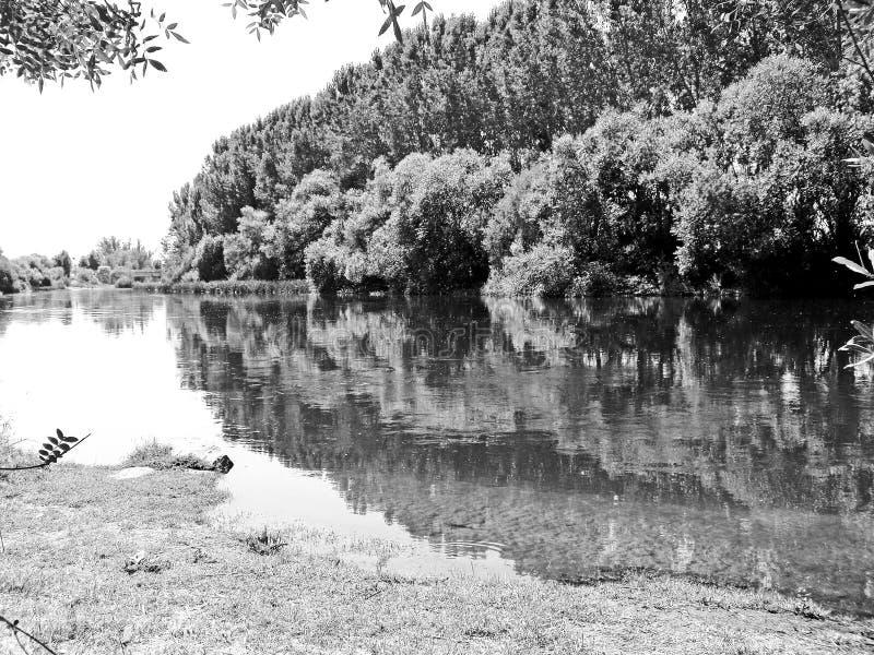 Fluss mit Bäumen auf Schwarzweiss stockfotos