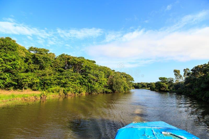 Fluss mit grünen Bäumen auf den Banken in einer tropischen Landschaft stockfoto
