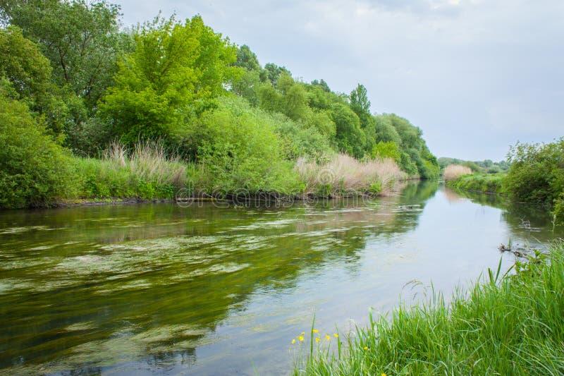Fluss mit Gras bedeckt stockfotos