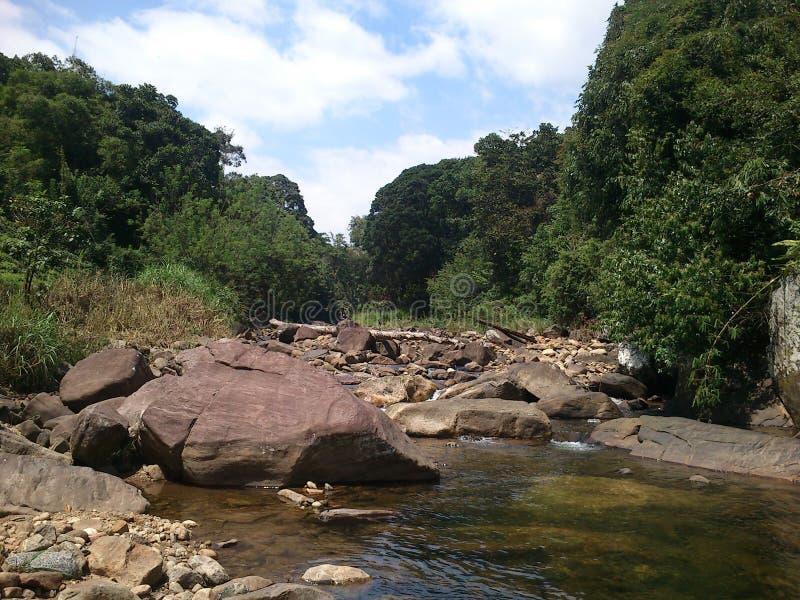 Fluss mit schöner Natur stockfoto