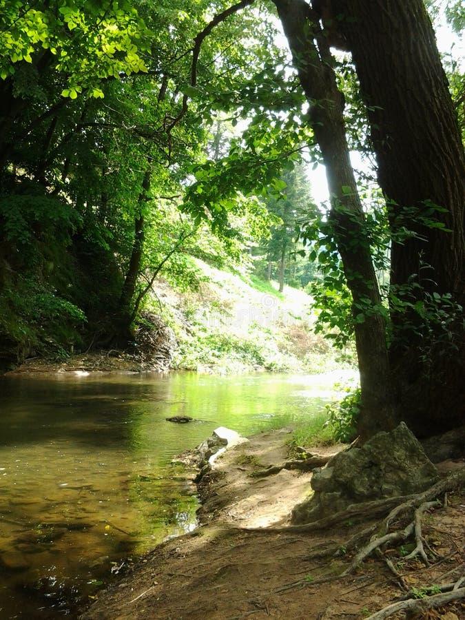 Fluss Mlava stockfotografie