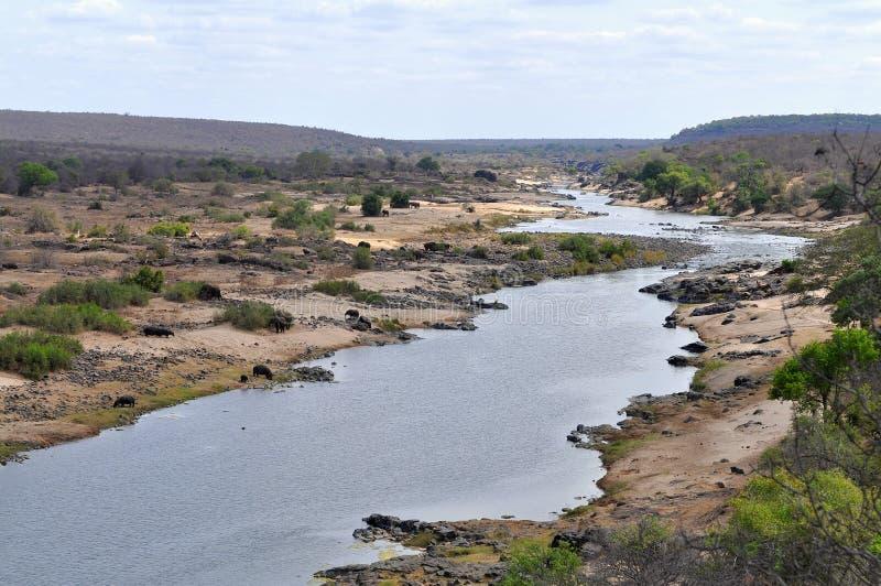Fluss Olifants mit Tier, Kruger NP, Südafrika stockfotografie