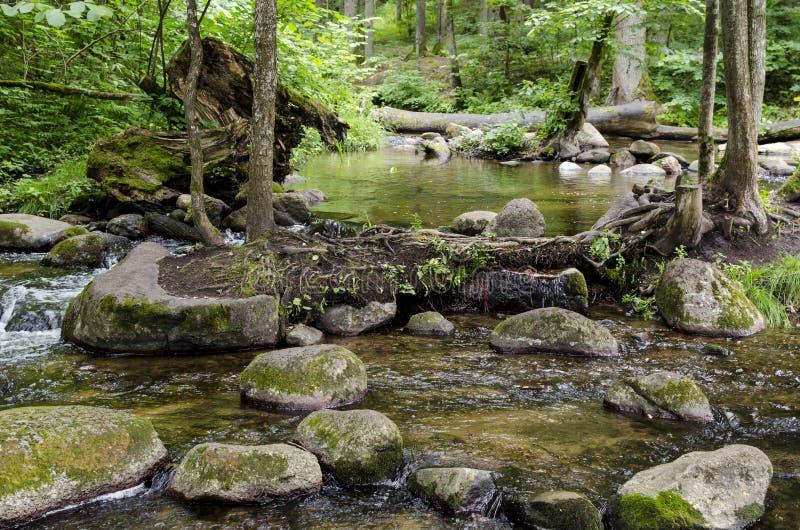 Fluss SaidÄ- fließt in Neris Regional Park in Litauen lizenzfreie stockfotografie