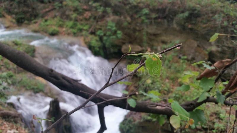 Fluss und Bäume stockfotos
