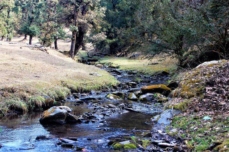 Fluss- und Baumlandschaft, die schön schaut stockfotografie