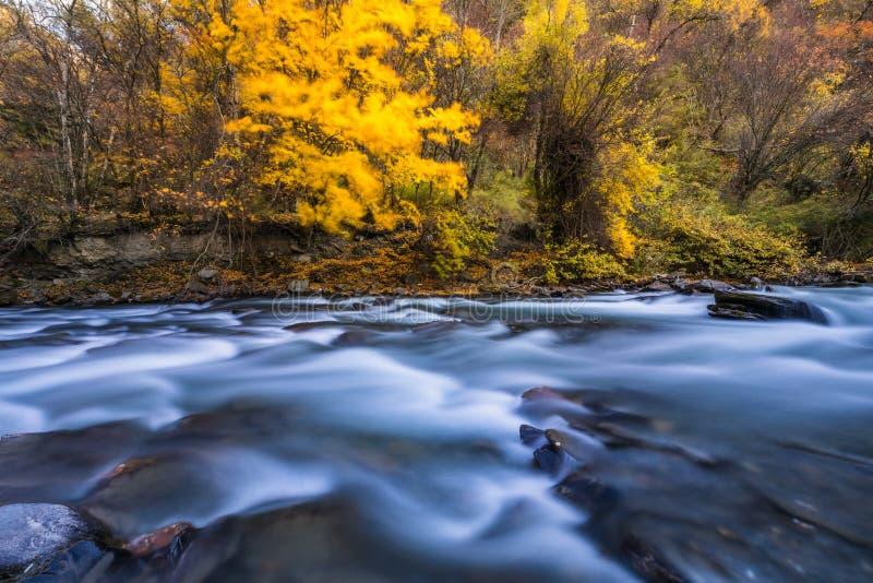 Fluss und gelbes Blatt im Fall lizenzfreie stockfotografie