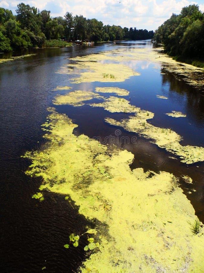 Fluss und grüne Bäume lizenzfreie stockfotografie