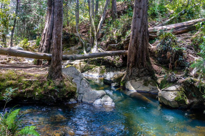 Fluss und Holz bei Arvi parkt - Medellin, Antioquia, Kolumbien lizenzfreies stockfoto