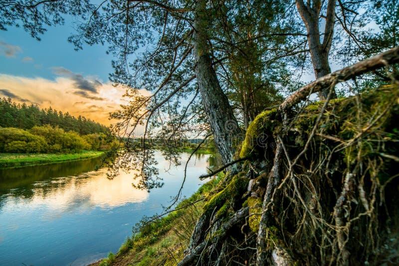 Fluss und Wald stockfotografie