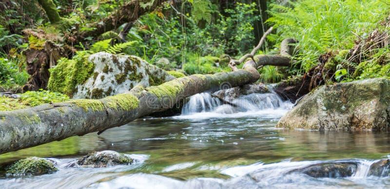 Fluss und Wald mit einem gefallenen Baum in der Natur lizenzfreie stockbilder