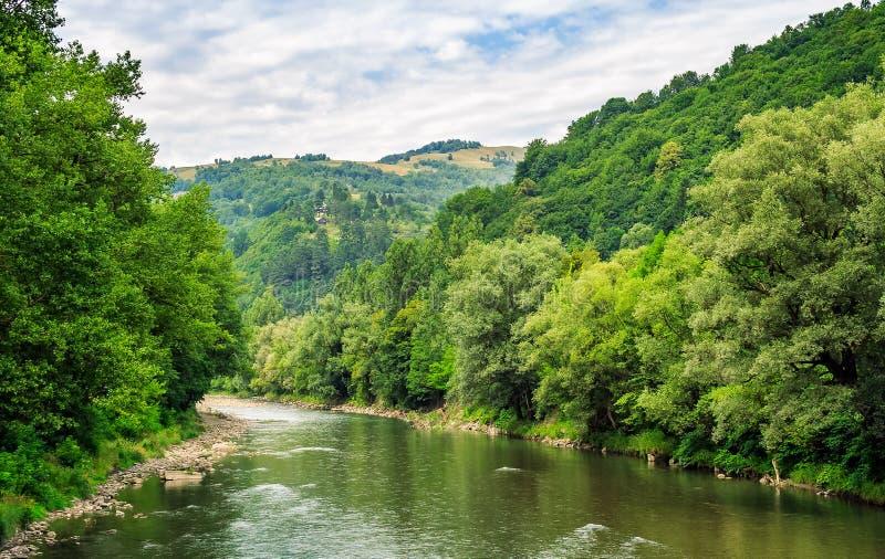Fluss unter dem Wald in den malerischen Karpatenbergen stockfotografie