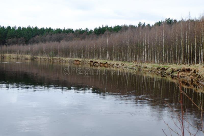 Flussbank stockfotografie