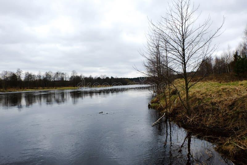 Flussbank stockbilder