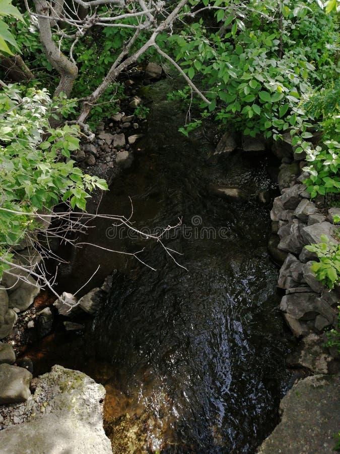 Flussbaum lizenzfreie stockfotografie