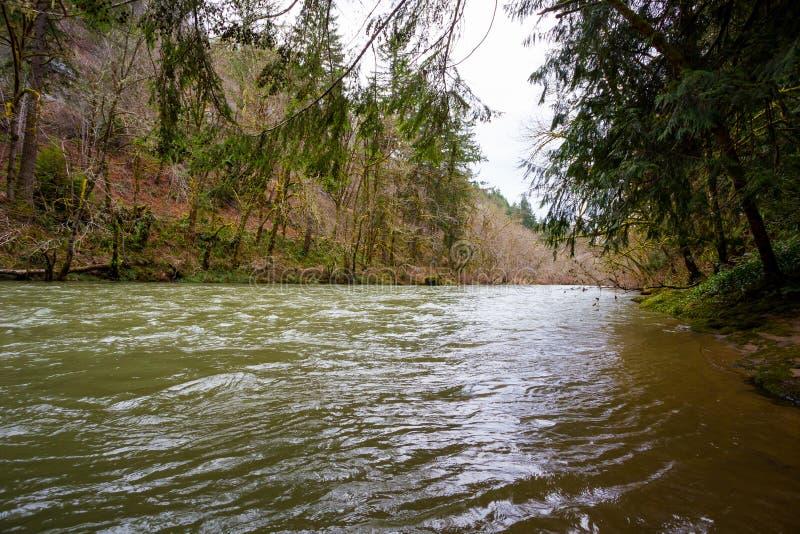 Flussi del Regular del fiume di Siuslaw immagini stock libere da diritti