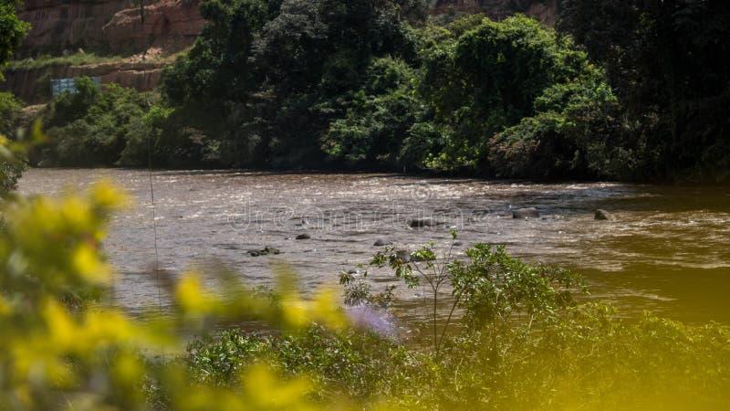 Flusskolumbien-amazonas stockbilder