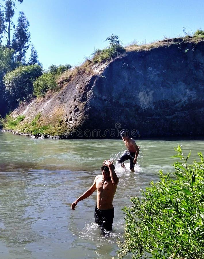 Flusskondor stockbild