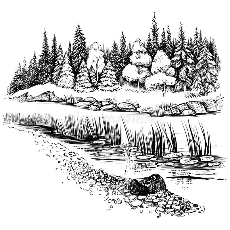 Flusslandschaft mit Nadelbaumwaldvektorillustration stock abbildung