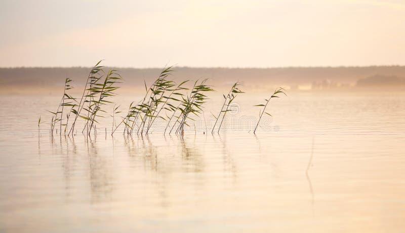 Flusslandschaft mit Schilf und Nebel lizenzfreie stockfotos