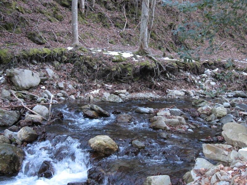 Flussnaturstein und -bäume lizenzfreie stockfotos