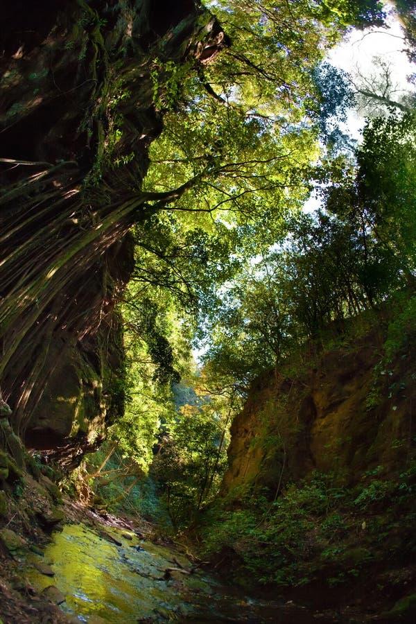 Flusso attraverso la foresta fotografia stock