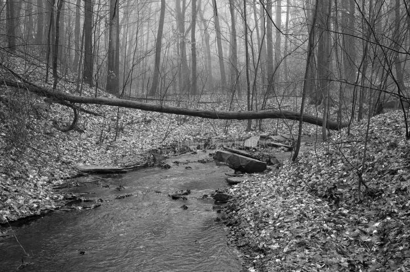 Flusso in in bianco e nero fotografie stock libere da diritti