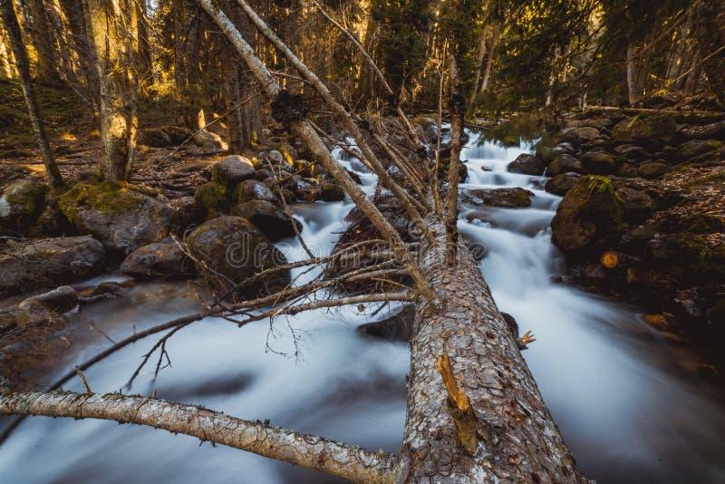 Flusso continuo della cascata in foresta fotografia stock libera da diritti