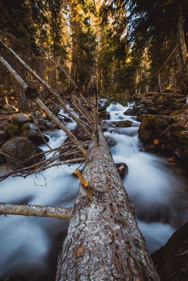 Flusso continuo della cascata in foresta fotografie stock libere da diritti