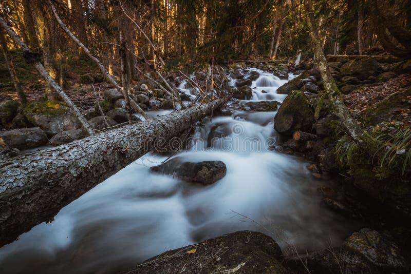 Flusso continuo della cascata in foresta immagini stock libere da diritti