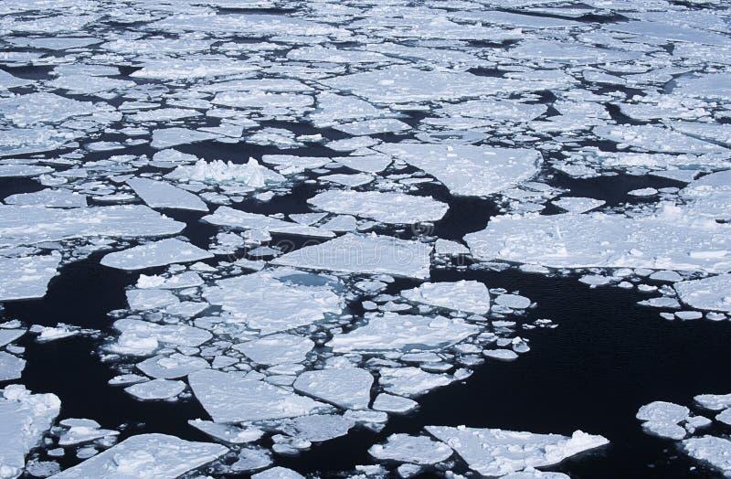 Flusso Del Ghiaccio Di Mare Di Weddel Dell Antartide Fotografia Stock Libera da Diritti