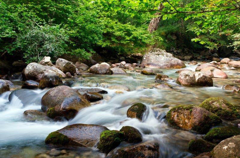 Flusso dell'acqua in foresta fotografie stock