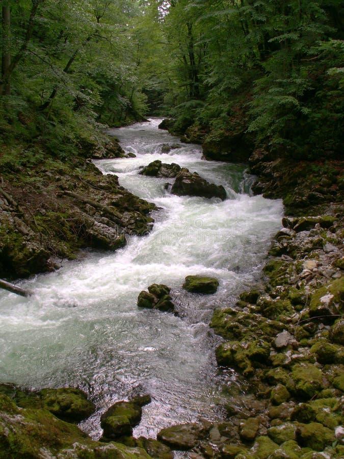 Download Flusso della foresta immagine stock. Immagine di ravine - 3891253